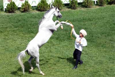 Türk Atı Ahal Teke Ve Ingiliz Atlarının Kökeni Türk